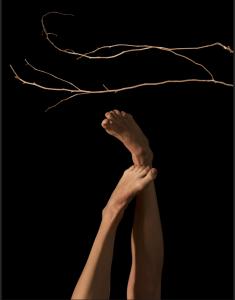woodear_limbs